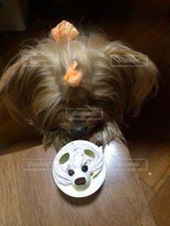 犬の写真・画像素材[514965]