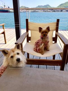 犬の写真・画像素材[598760]