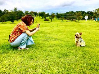 女性,犬,動物,芝生,撮影,ピクニック,いぬ,ヨークシャーテリア,わんちゃん,撮影会,アロハ,よーきー