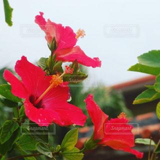 花の写真・画像素材[536632]