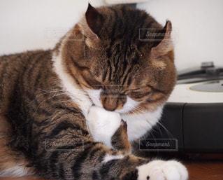 猫の写真・画像素材[533698]