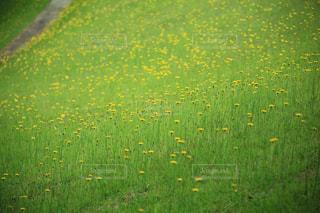花,春,黄色,黄色の花