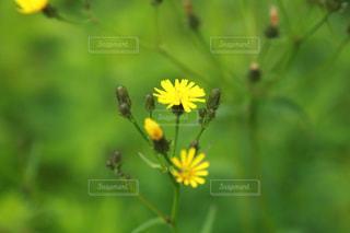 花,春,黄色,黄色の花,イエロー,黄