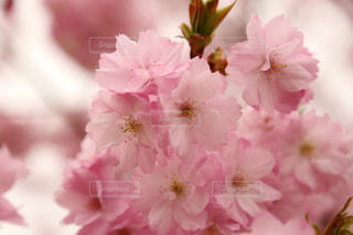 近くの花のアップの写真・画像素材[1835284]