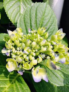 花の写真・画像素材[538703]