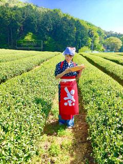 茶摘み体験の写真・画像素材[1049699]