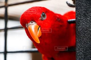 鳥 - No.536714