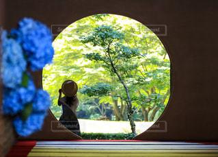 花,緑,あじさい,紫,麦わら,少女,紫陽花,初夏,canon