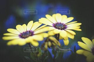 花のクローズアップの写真・画像素材[2140661]