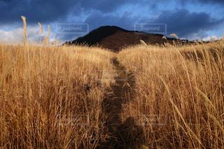 背景の木と背の高い草のフィールド - No.769357