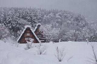 冬,木,雪,白,家