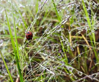 自然,雨,水,水滴,虫,テントウムシ,梅雨