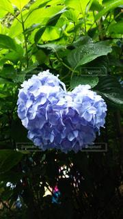 青の写真・画像素材[552820]