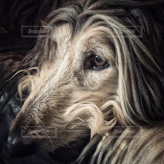 犬の写真・画像素材[11348]