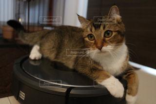 猫の写真・画像素材[517731]
