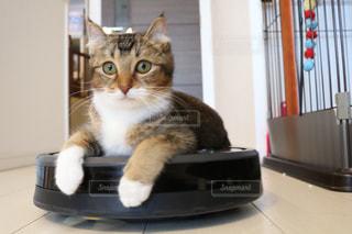 猫の写真・画像素材[517740]