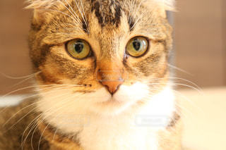 猫の写真・画像素材[606044]