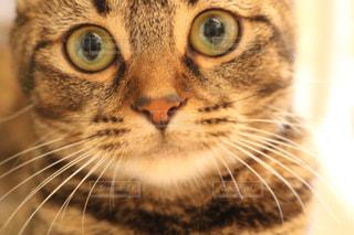 猫の写真・画像素材[606047]