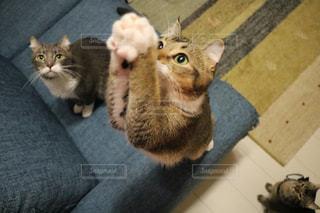 猫の写真・画像素材[705324]
