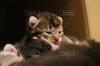 横になって、カメラを見ている猫 - No.726692