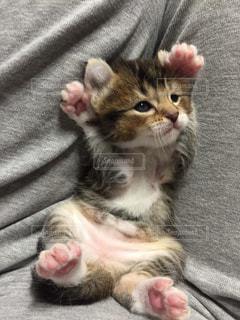 ベッドの上で横になっている猫の写真・画像素材[726695]