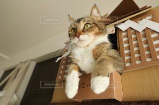 テーブルの上に座って猫の写真・画像素材[973258]