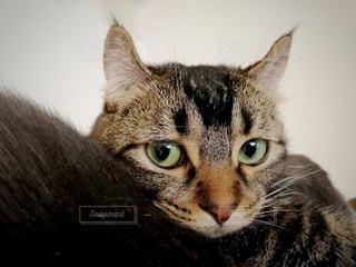 近くに猫のアップの写真・画像素材[1138105]