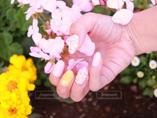 花を持っている手の写真・画像素材[1152542]