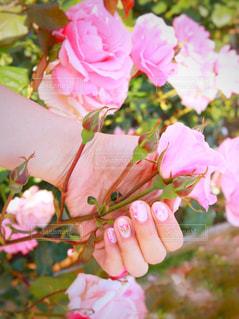 近くの花のアップの写真・画像素材[1182170]