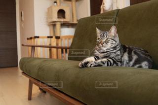 椅子に座って猫の写真・画像素材[1212485]
