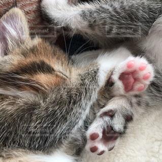 近くに眠っている猫のアップの写真・画像素材[1254902]