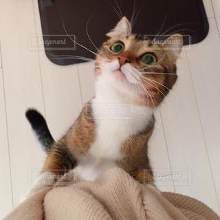 カメラを見ている猫の写真・画像素材[1254948]