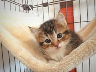 金属フェンスの上に座っている猫の写真・画像素材[1254971]