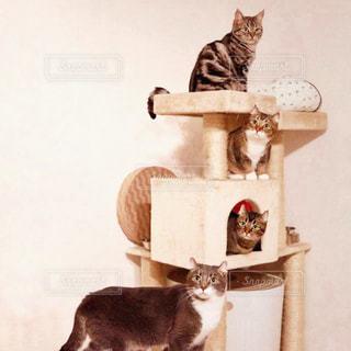 テーブルの上に座って猫の写真・画像素材[1257102]