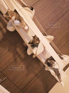 木製の床の上に座っている猫の写真・画像素材[1261441]