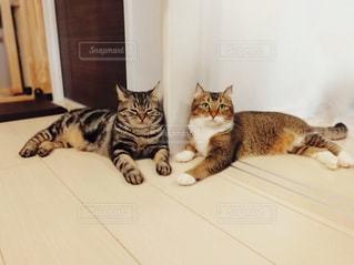 地面に横になっている猫の写真・画像素材[1264675]