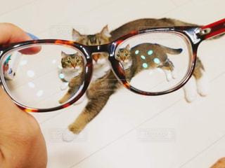 猫の写真・画像素材[1266847]