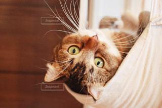 近くに猫のアップの写真・画像素材[1290596]