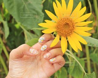花を持っている手の写真・画像素材[1330335]