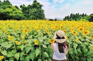 フィールドに黄色の花の人の写真・画像素材[1415123]