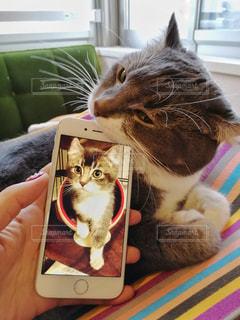 猫の写真・画像素材[1420236]