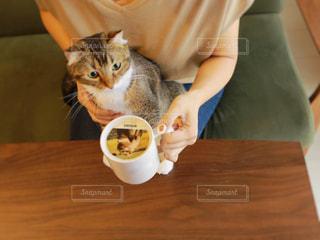 コーヒー カップの横に座っている猫の写真・画像素材[1454008]