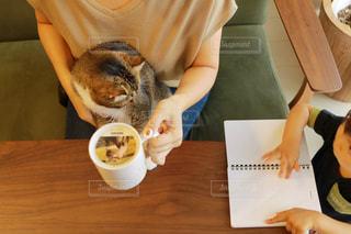 テーブルに座って食べ物を食べる猫の写真・画像素材[1454010]