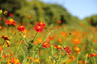 近くの花のアップの写真・画像素材[1454428]