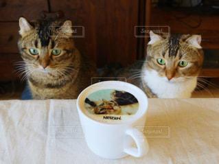 猫,かわいい,仲良し,おうちカフェ,雑種,ネスカフェ,チャバ,ミッコ,フォトラテ