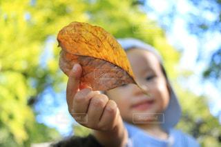 子ども,風景,公園,秋,木,東京,枯葉,笑顔,赤ちゃん,幼児,男の子,秋空,六義園,1歳,陽ざし
