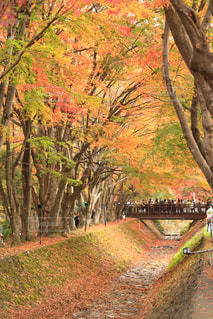 フォレスト内のツリーの写真・画像素材[1616889]