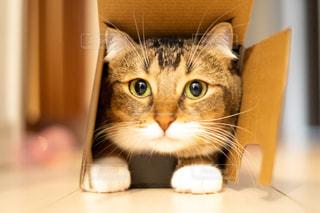 テーブルの上に座って猫の写真・画像素材[1685316]