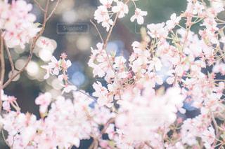 近くの花のアップの写真・画像素材[1873451]