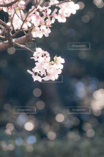 近くの花のアップの写真・画像素材[1874917]